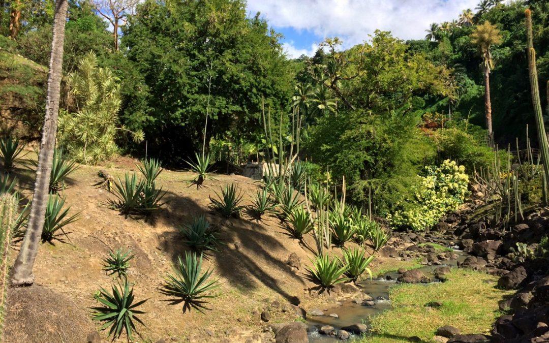 7 plus beaux jardins touristiques à visiter en Martinique