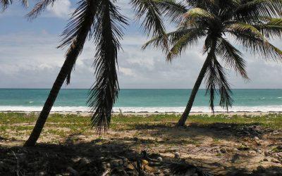 Le tourisme vert en Martinique : une tendance de fond