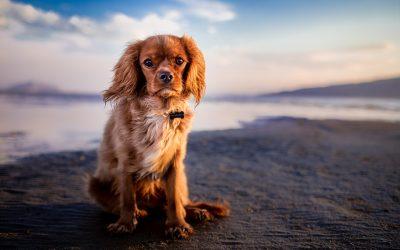 Visiter la Martinique avec son chien : notre guide