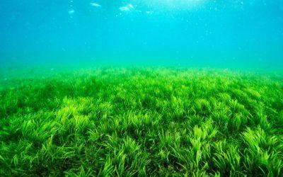Martinique : quelles plages sont épargnées par les sargasses ?